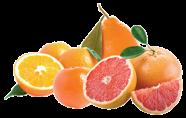 FruitSale Grapefruit-Oranges3