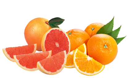 FruitSale Grapefruit-Oranges2